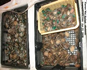 Wet Market, Xiamen, China. Abalones Retail. Toa Payoh Vets