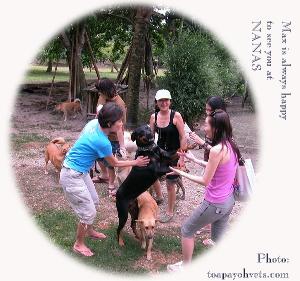 Max, Rottweiler, rehomed and happy at NANAS. Visit him. Toa Payoh Vets.