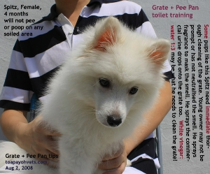Grate + Pee Pan Toilet. Spitz, Female, 4 months, Singapore. Toa Payoh Vets