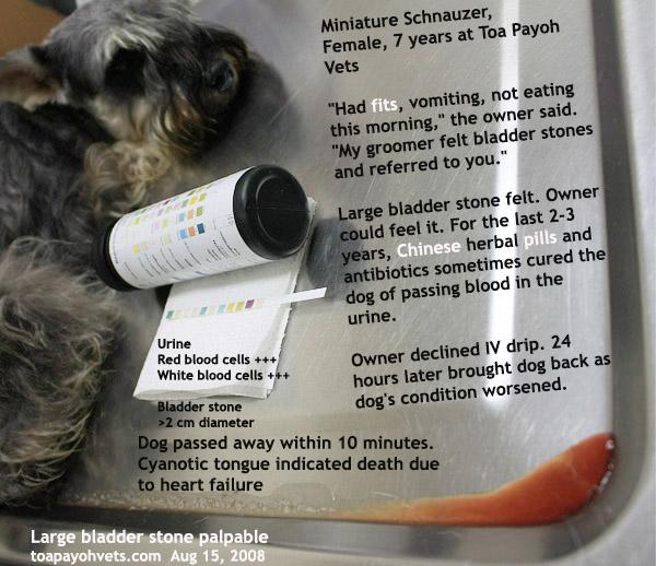 ASingapore Toa Payoh Veterinary Vets Dog Cat Rabbits Hamster - Dog passes owner returns 2 years