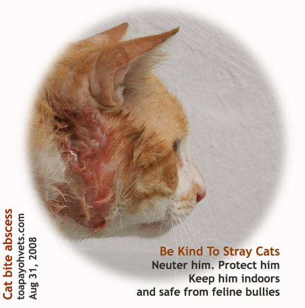 cat breeders wisconsin