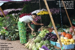 Mynamar flowers, fruits and vegetables, Pyin Oo Lwin, Toa Payoh Vets