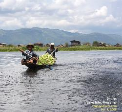 Floating vegetable farms on Lake Inle. Harvested crop going to the floating market.  Asiahomes.com Travels and Tours