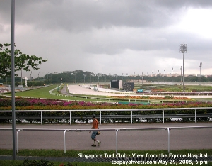 Singapore Turf Club viewed from Equine Hospital. May 29, 2008 evening. Toa Payoh Vets