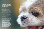 old shih tzu 13 years, multiple warts 76 warts excised 8 months ago, toapayohvets singapore
