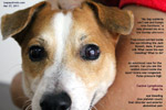 canine lymphoma lymphosarcoma stage 5a  jack russell bleeding inside eye toapayohvets singapore