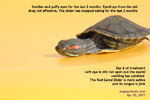 poor hygiene and environment - eyes swollen and closed - red-eared slider, toapayohvets, singapore