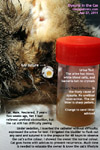 feline lower urinary tract disease FLUTD - dysuria - cat-male-neutered-pees-a bit-problem-singapore-toapayohvets
